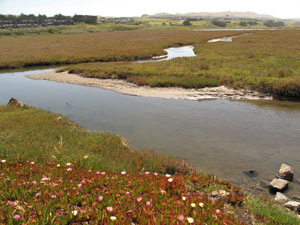 Bodega Bay Bird Walk